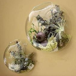 2Pcs Wall Mounted Glass Vase Air Plants Holders Wall Hanging